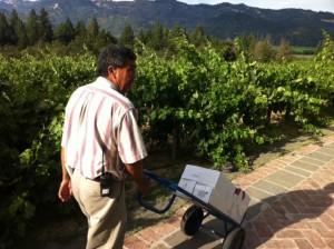 Купили вино - Долина Напа